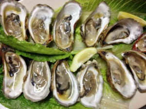 Farm raised oysters and plump and fresh at Spring Creek restaurant on Alligator Harbor.