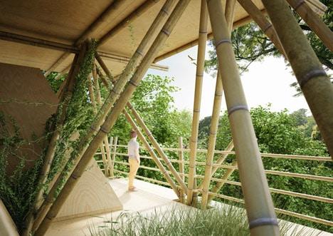 Bamboo#3