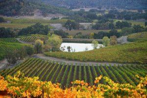 St.-Supery-Dollarhide-Estate-Vineyard